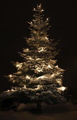 Weihnachtsbaum (Quelle: Harry Hautumm  / pixelio.de)
