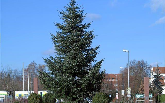 Weihnachtsbaum Friedrichstal 2012