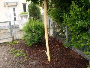 Baum Spieplatz Büchig