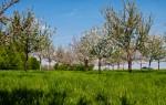 Streuobstbäume können wieder bestellt werden