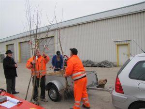 Baumprogramm