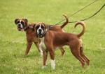 Gefährliche Hundeköder in Stutensee