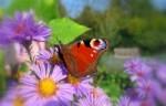 Spöck sucht Teilnehmer für offene Gärten