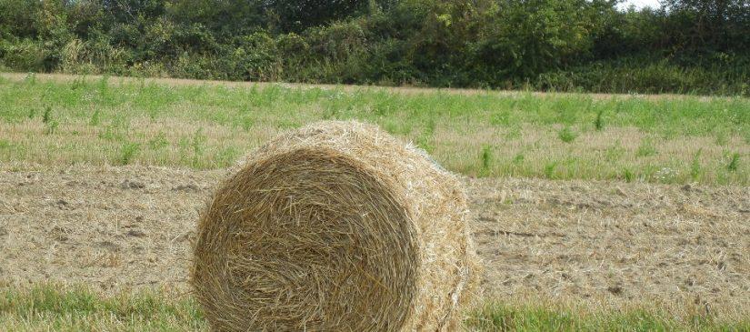 Felder bei Spöck