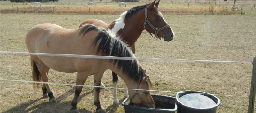 Pferde bei Friedrichstal
