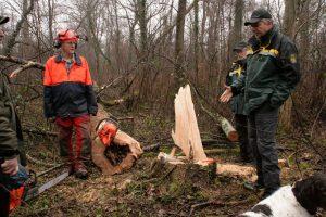 Eine Baumfällaktion wurde zur Anschaulichkeit für die Teilnehmer bei der Waldbegehung dargestellt.