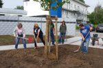 Baumpflanzung im Seegrabenweg