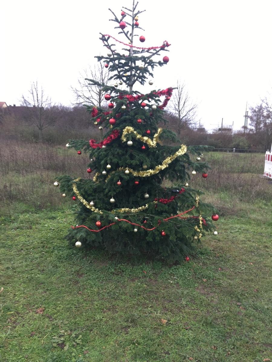 Ich Habe Den Weihnachtsbaum Zerstört